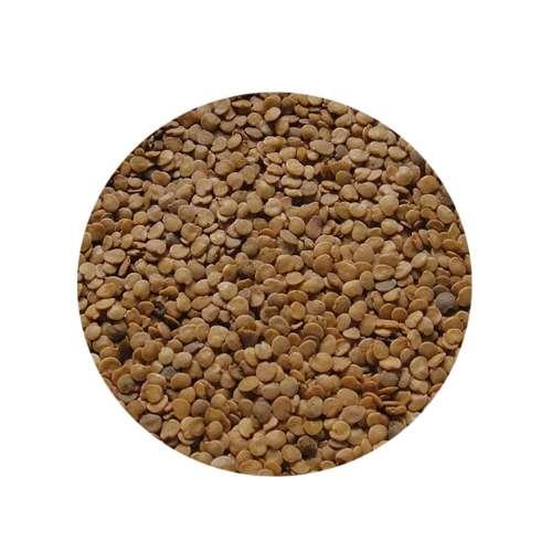 Brinjal Seeds - Eggplant Seeds