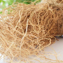 Vetiver Roots (Ramacham)